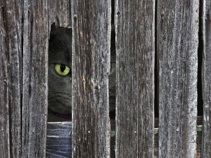 Katze-Zaun-Verstecken