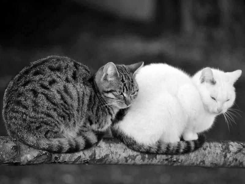 Schwarzweißes Doppelpack: Katzen im Garten — Bild: Shutterstock / Nemesis1975