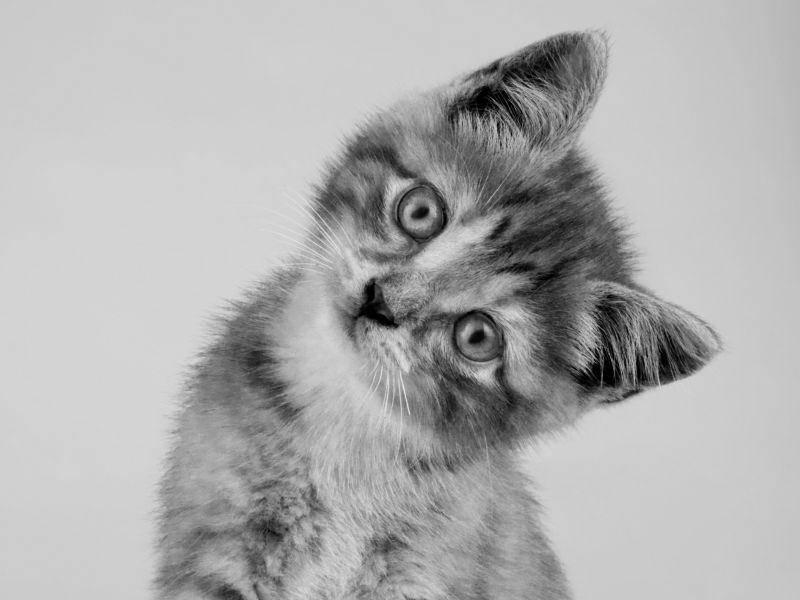 Katzenbaby: Frech gucken kann man auch in Schwarzweiß — Bild: Shutterstock / Lana Langlois