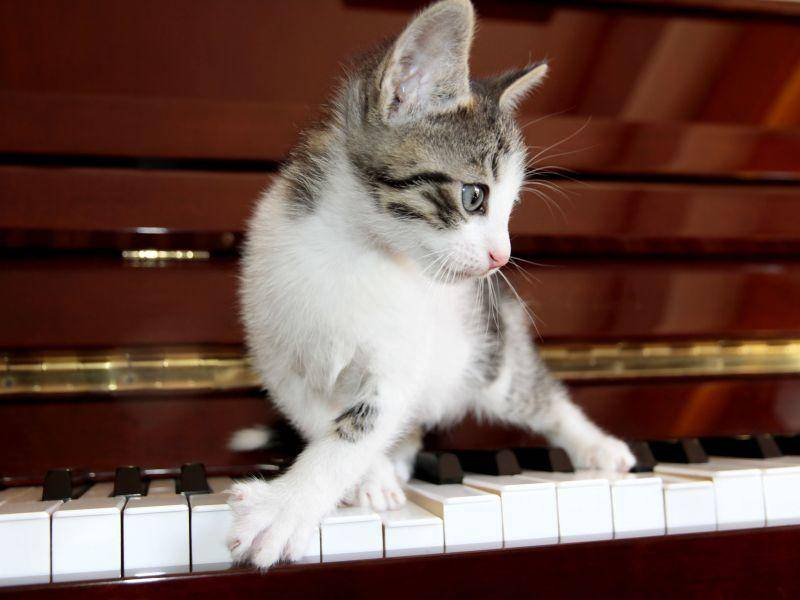 ... weil Katzen immer für beste Unterhaltung sorgen — Bild: Shutterstock / giuliaisabella