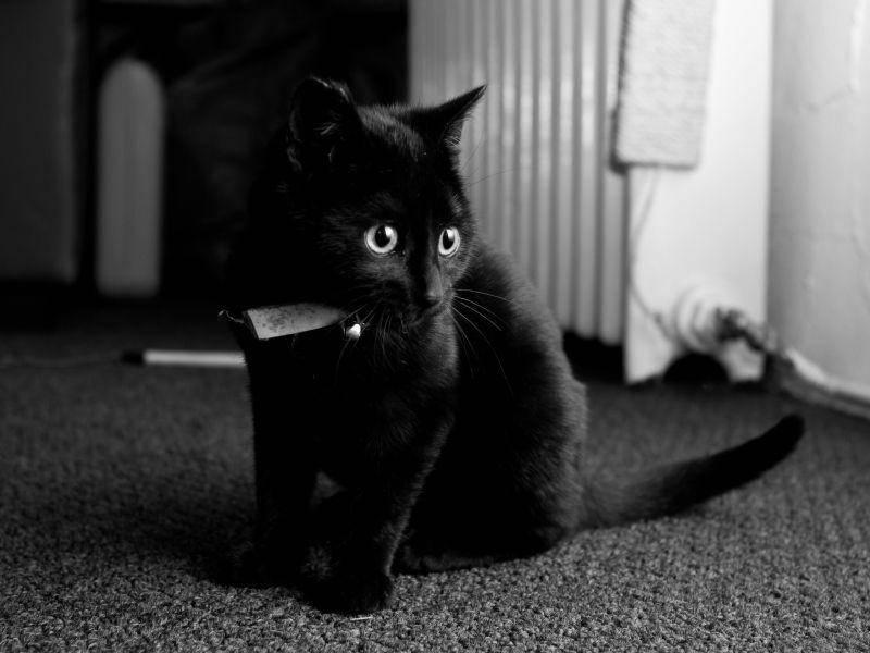 Dreimal schwarzer, äh, schwarzweißer Kater — Bild: Shutterstock / mike taylor
