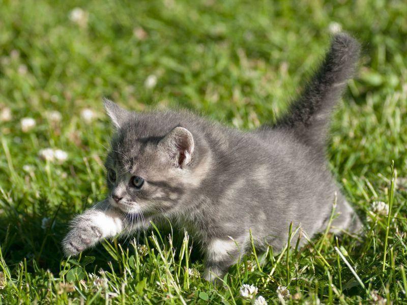 Sie sind so beliebt als Haustiere, weil... Katzen als Babys einfach bezaubernd und unwiderstehlich sind — Bild: Shutterstock / AnnaIA