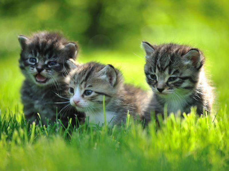 Kaffeekränzchen auf der Wiese? Süße Katzenbabyrunde — Bild: Shutterstock / Nadezhda V. Kulagina