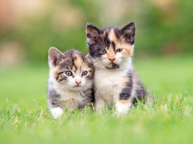 Tierisch süß: Katzenbabys mit unverkennbarer Ähnlichkeit — Bild: Shutterstock / JanVlcek