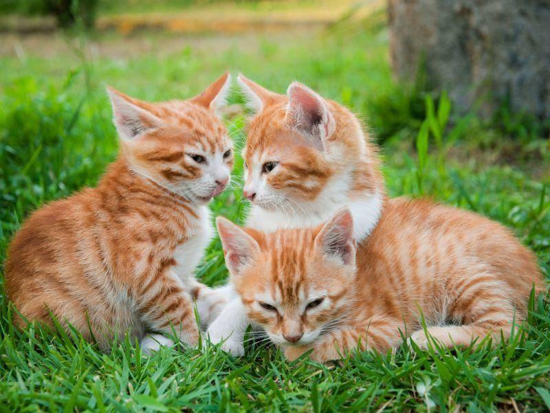 Und auch diese drei Katzenbabys gleichen sich wie ein Ei dem anderen — Bild: Shutterstock / BestPhotoPlus