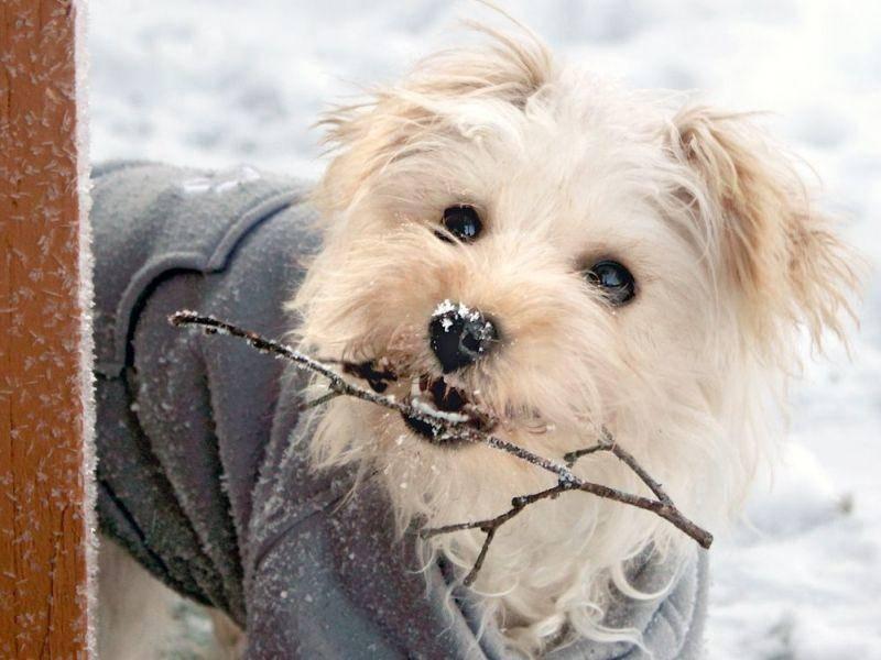 Malteser und Stöckchen holen? Na klar! — Bild: Shutterstock / Marrero