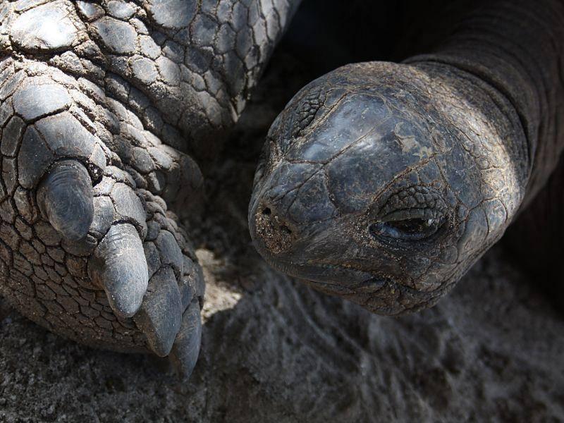 Ganz nah: Eine große Meeresschildkröte — Bild: Shutterstock / bandit_74