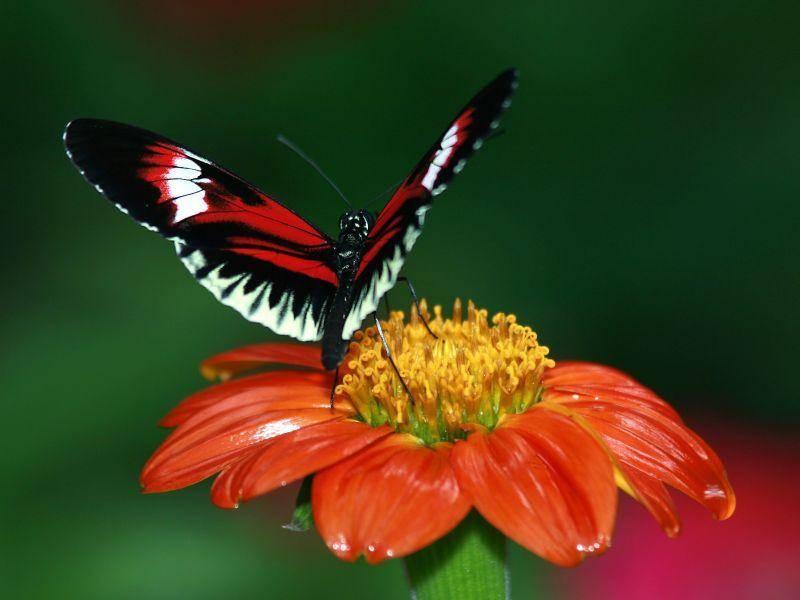 Tropischer Hingucker: Ein kunterbunter Schmetterling — Bild: Shutterstock / REDAV