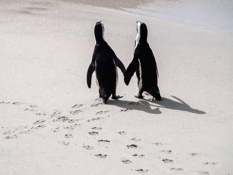 Hand in Hand: Ein Pinguinpaar — Bild: Shutterstock / FAUP