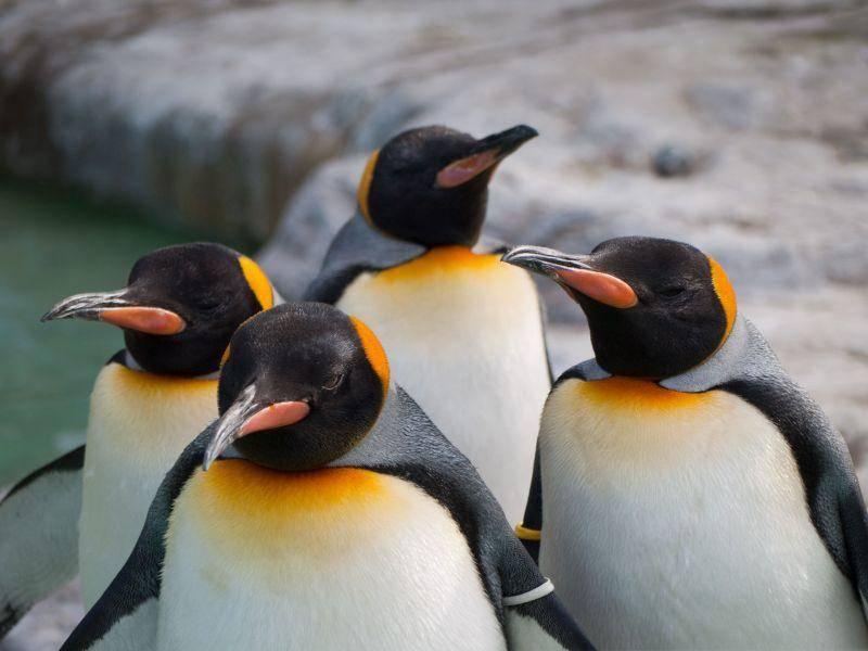 Und zum Schluss: Ein Pinguingruppenporträt — Bild: Shutterstock / iymsts