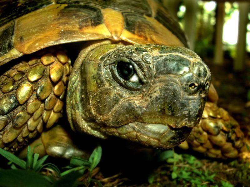 Faszinierend: Das Gesicht einer Schildkröte von Nahem — Bild: Shutterstock / Mila Atkovska