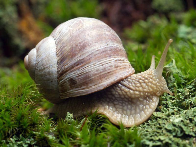 Schnecke: Gerät im Frühling richtig aus dem Häuschen — Bild: Shutterstock / Michal Ninger