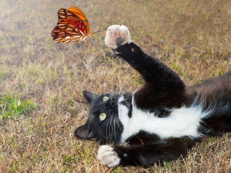 """Katze spielt mit Schmetterling: """"Fang mich doch!"""" — Bild: Shutterstock / Sari ONeal"""