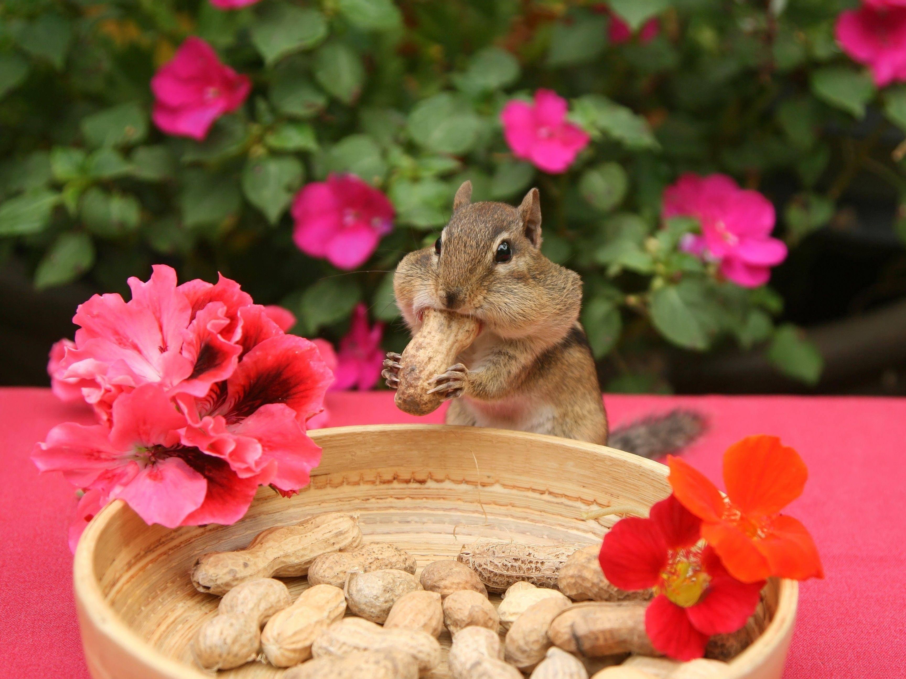 Platz 8: Darauf erstmal eine Erdnuss: Ein Streifenhörnchen feiert seine Top-Platzierung — Bild: Shutterstock / Elaine Davis