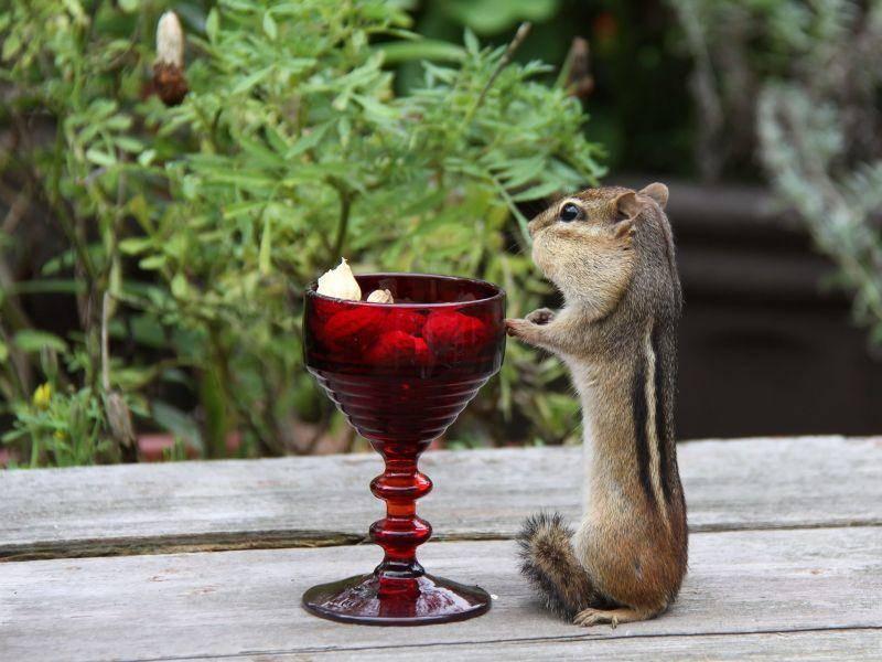 Dieses Streifenhörnchen hat sich einen besonders lauschigen Platz zum Essen ausgesucht — Bild: Shutterstock / Elaine Davis