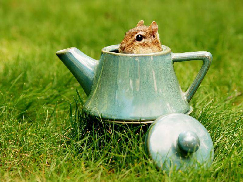 Streifenhörnchen und Versteckenspielen? Immer und zu jeder Zeit! — Bild: Shutterstock / Margaret M Stewart
