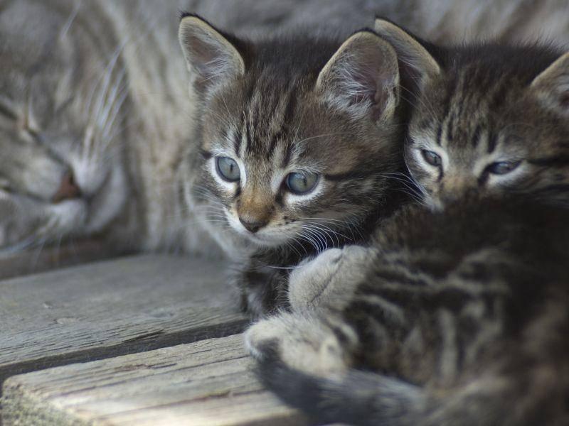 Und im Kuscheln sind Katzenbabys auch ganz große Klasse! — Bild: Shutterstock / DUSAN ZIDAR