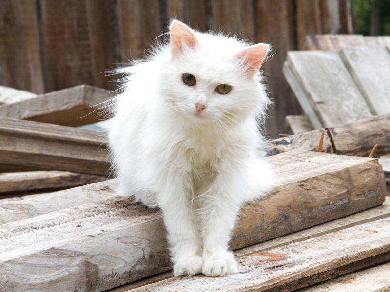 Aber gut auf das Fell aufpassen: Weiße Katze beim Freigang — Bild: Shutterstock / Tatjana Romanova