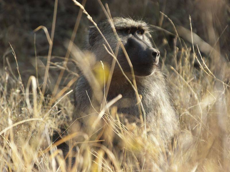 Ein Affe nimmt sich eine Ruhepause in der Sonne — Bild: Shutterstock / Petra B. Zaugg