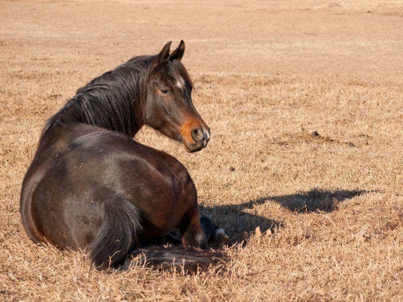 Als Wüstenpferde sind Araber Sonnenanbeter — Bild: Shutterstock / Sari ONeal