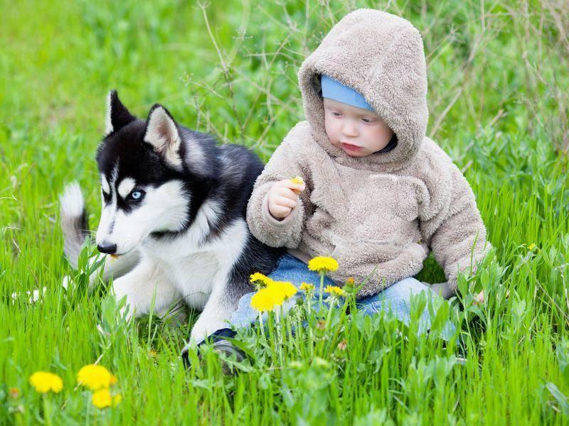 Früh aneinander gewöhnt werden Kinder und Hunde schnell zum eingespielten Team — Bild: Shutterstock / Grekov's