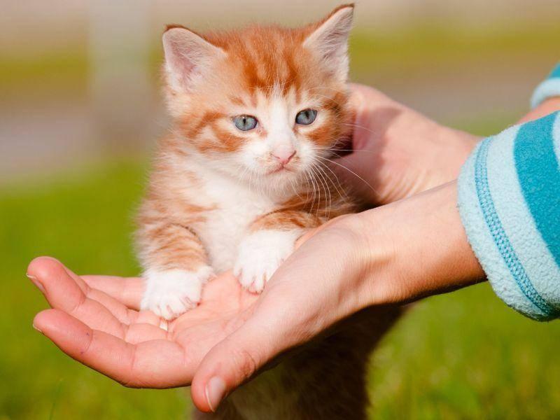 Rotes Katzenbaby findet die Welt noch ziemlich aufregend — Bild: Shutterstock / ots-photo