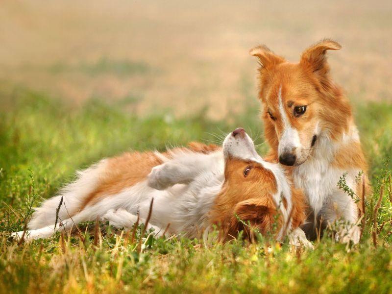 ... weil Hundegeschwister auch mal als doppeltes Lottchen durchgehen können — Bild: Shutterstock / Ksenia Raykova