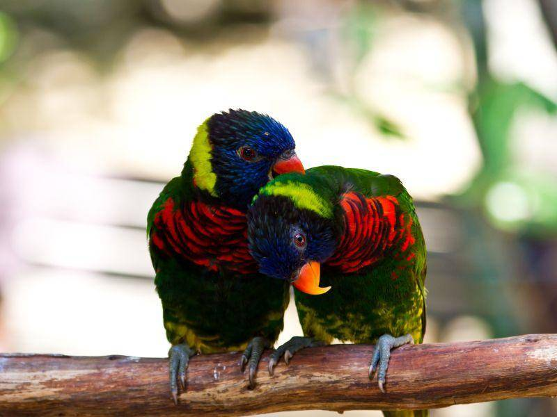 Einfarbig ist doch langweilig! Ein Vogelpaar bekennt Farbe — Bild: Shutterstock / bcampbell65