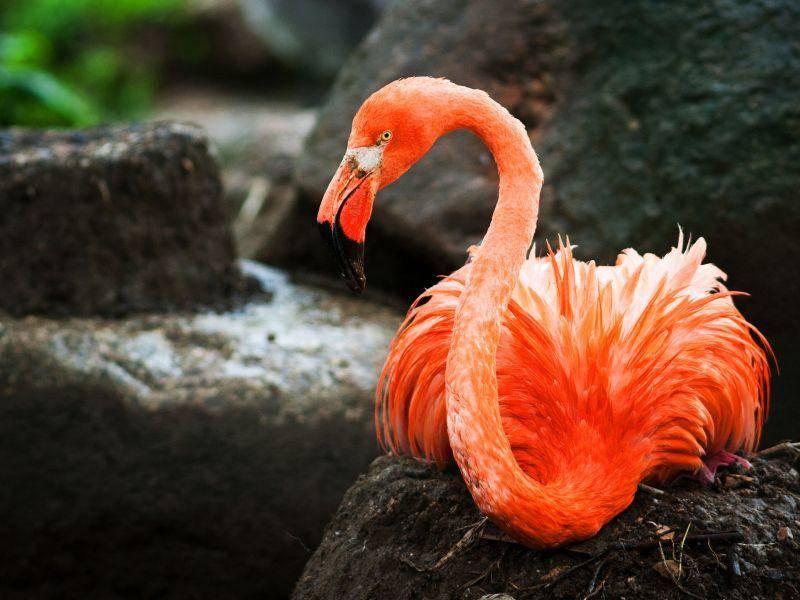 Tolles Farbenspiel: Ein Flamingo bei der Rast — Bild: Shutterstock / jurra8
