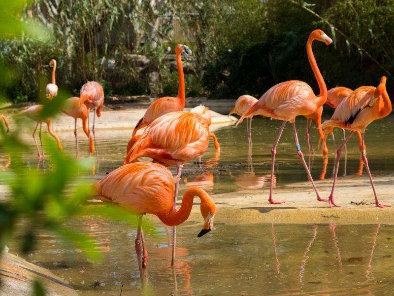 Elegant und hübsch: Flamingos bei der Nahrungssuche — Bild: Shutterstock / Nejron Photo