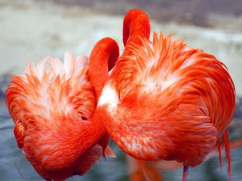 Gemütlich: Kleine Flamingo-Mittagspause — Bild: Shutterstock / Mikhail Nekrasov