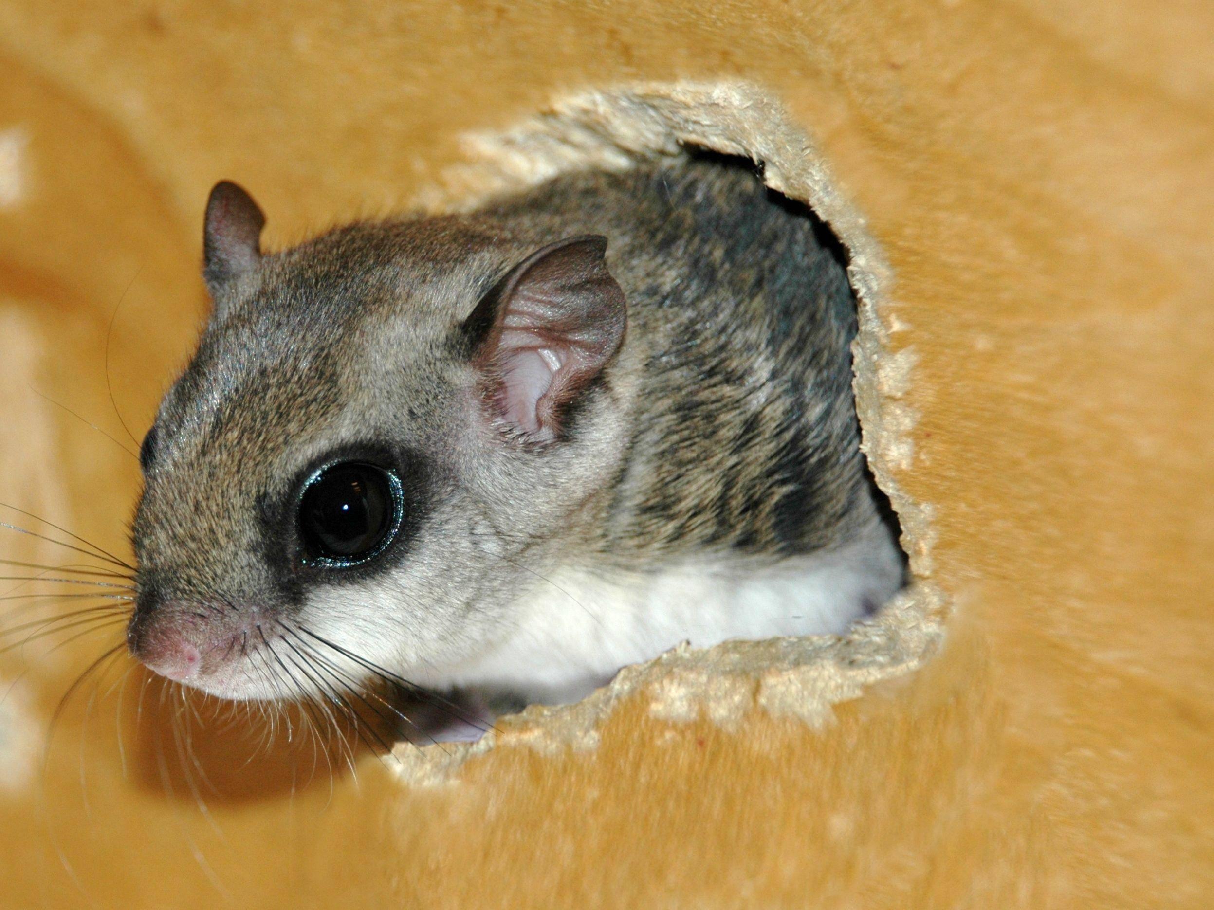 Auf zu neuen Abenteuern: Ein Hörnchen verlässt sein Nest — Bild: Shutterstock / Redwood