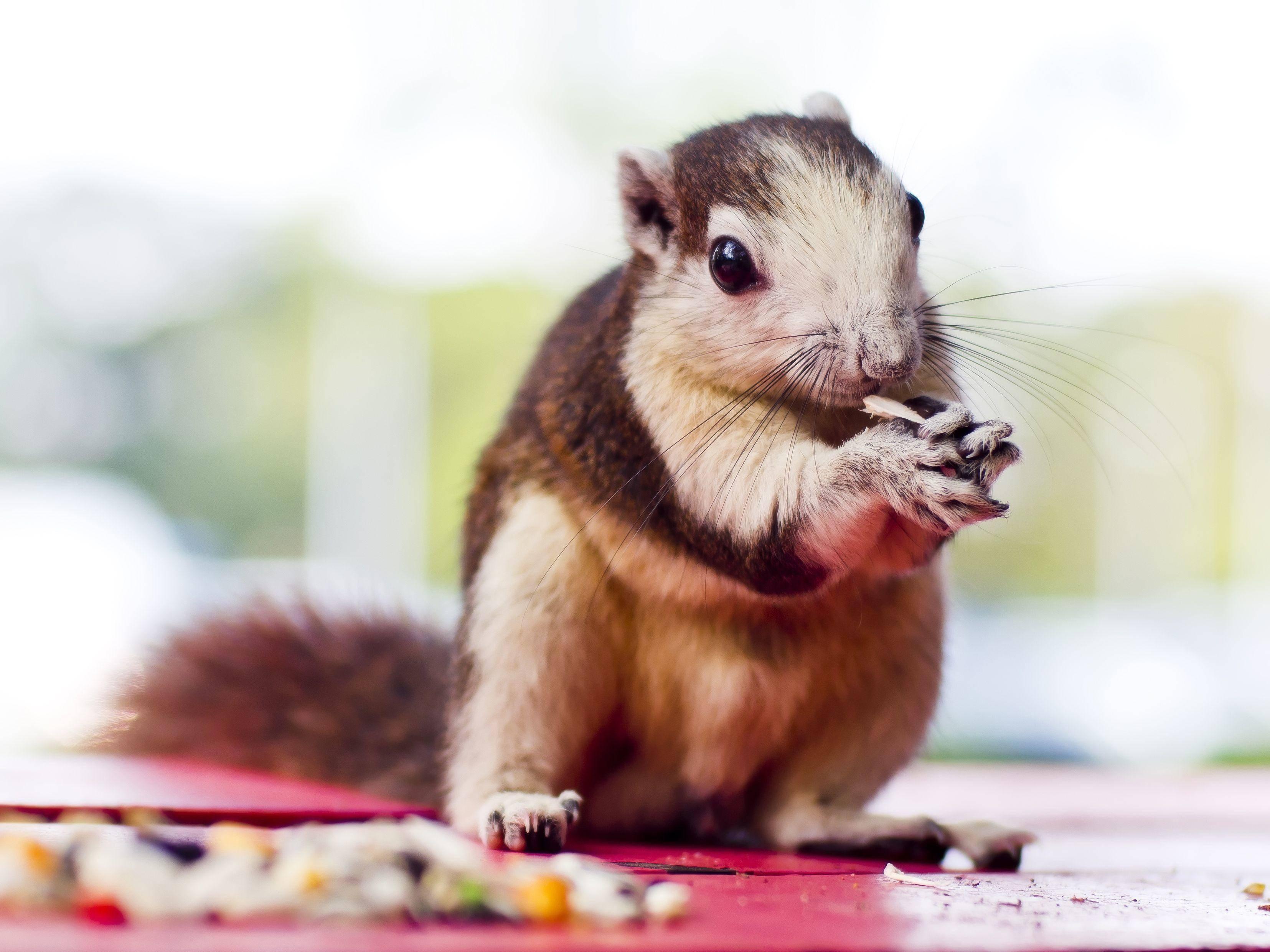 Alles meins! Hörnchen beim Picknick — Bild: Shutterstock / Mrs_ya