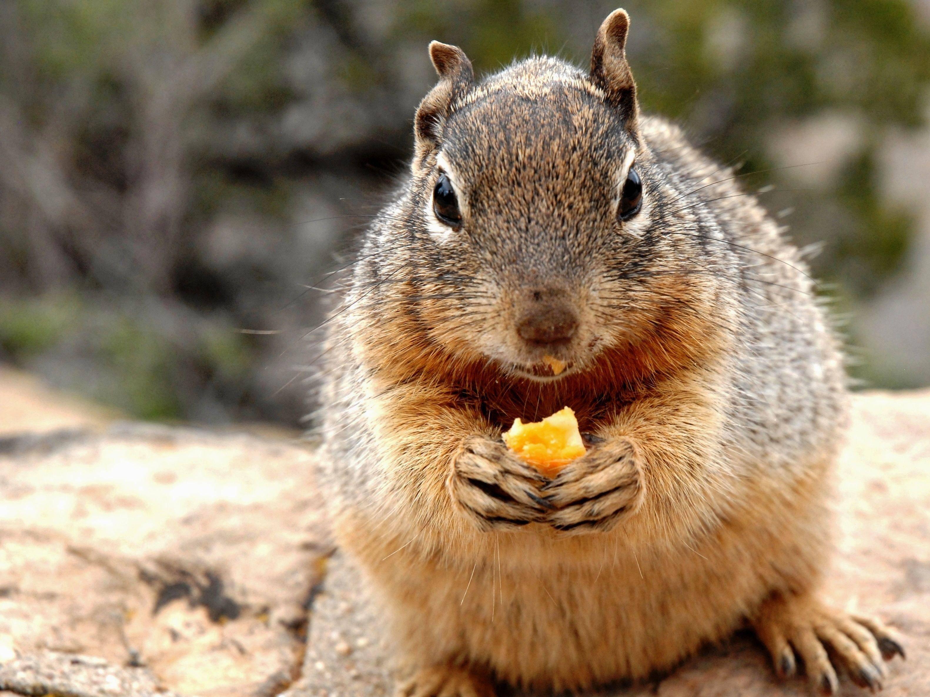 Lecker! Hörnchen mit einem Stück Käse — Bild: Shutterstock / Lissandra Melo
