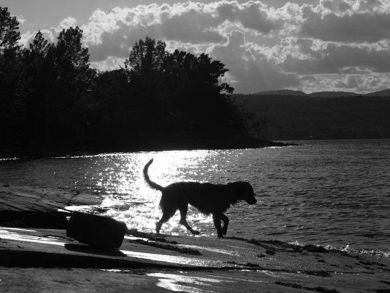 Hund-Silhouette-Schwarzweiss