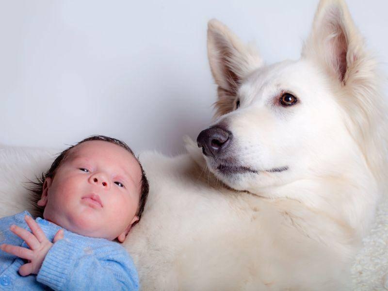 Hunde geben Kindern Wärme, Schutz und Vertrautheit — Bild: Shutterstock / amidala76