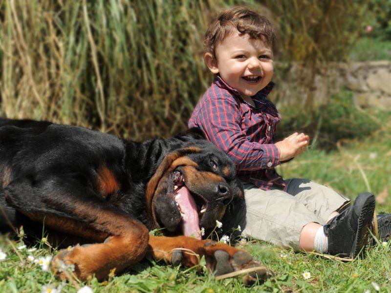 Eindeutig: Hunde und Kinder genießen das schöne Wetter am liebsten zu zweit — Bild: Shutterstock / cynoclub