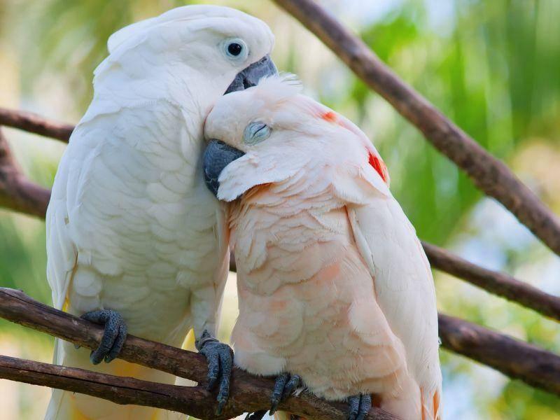 Dieses Vogelpaar ist zwar nicht ganz so bunt, aber trotzdem schön — Bild: Shutterstock / Natali Glado