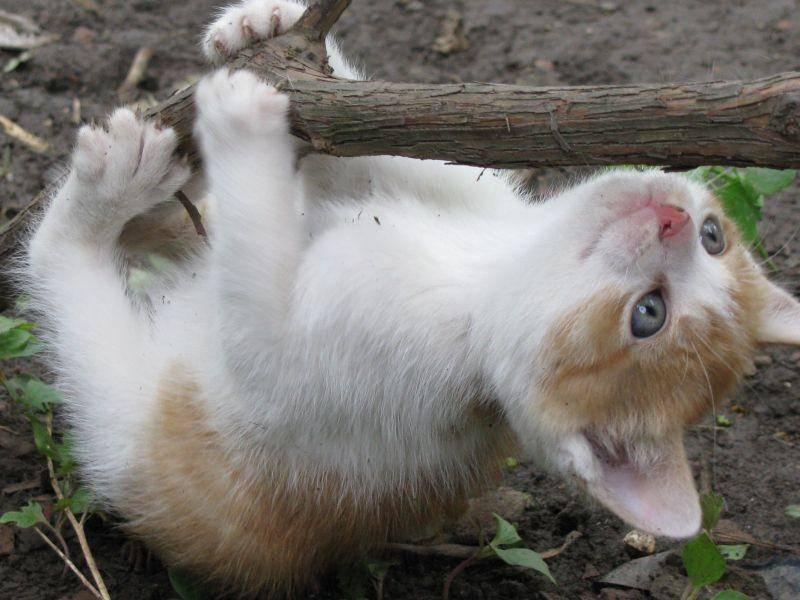 Bäumeklettern kann so abenteuerlich für Katzenbabys sein — Bild: Shutterstock / NotarYES