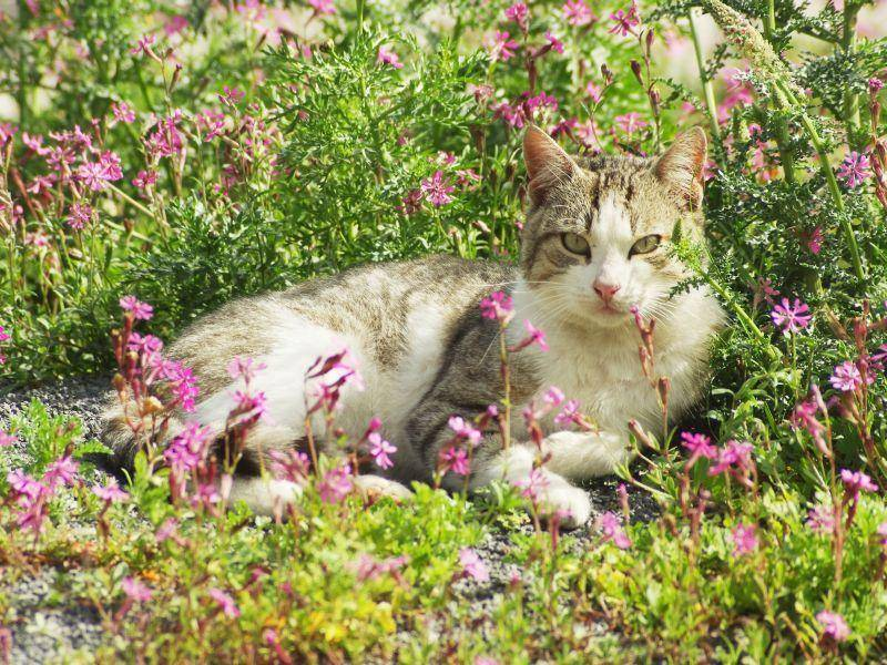 Welche Katze hat den besten Sonnenplatz? — Bild: Shutterstock / Dragoness