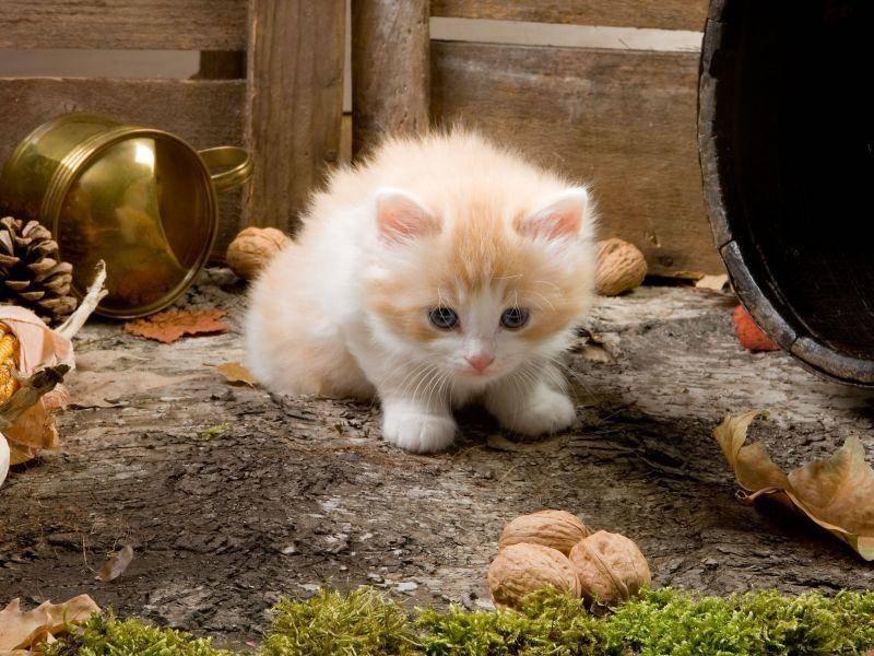 Auch schön für Katzenbabys: Ein Herbstausflug — Bild: Shutterstock / tadija