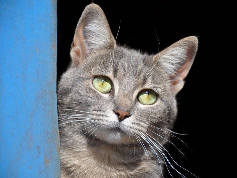 Schöne Katze: Und ab in die Sonne! — Bild: Shutterstock / Sari ONeal