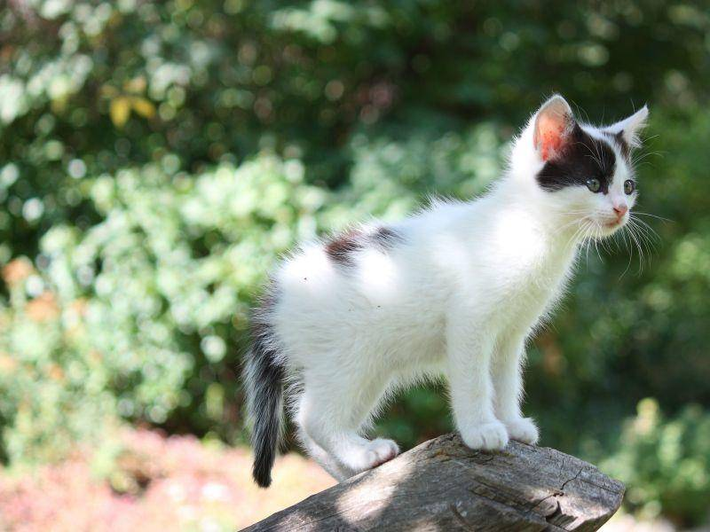 Nicht nur Holz ist eine perfekte Aussichtsplattform für Katzenbabys — Bild: Shutterstock / Anastasija Popova