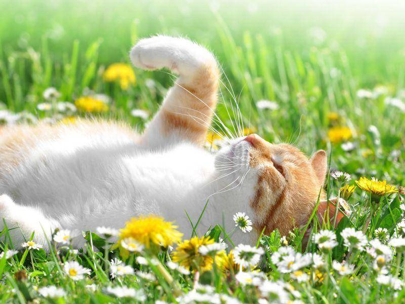 Sonnenanbeter: Katze im Blumenmeer — Bild: Shutterstock / Vaclav Volrab