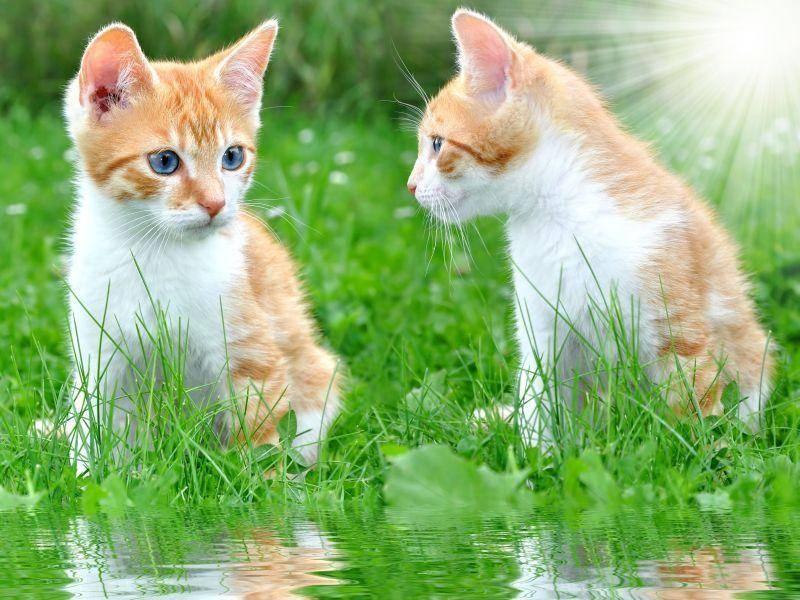 Auch schön: Zwei rote Jungkatzen machen es sich an einem sonnigen See gemütlich — Bild: Shutterstock / Vaclav Volrab