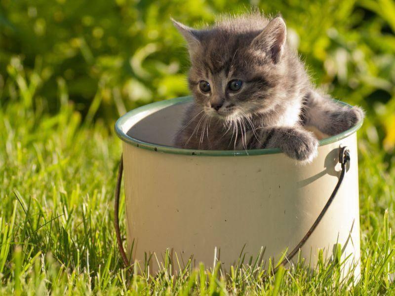 Spielen in der Sonne? Ein Traum für Babykatzen — Bild: Shutterstock / AnnaIA