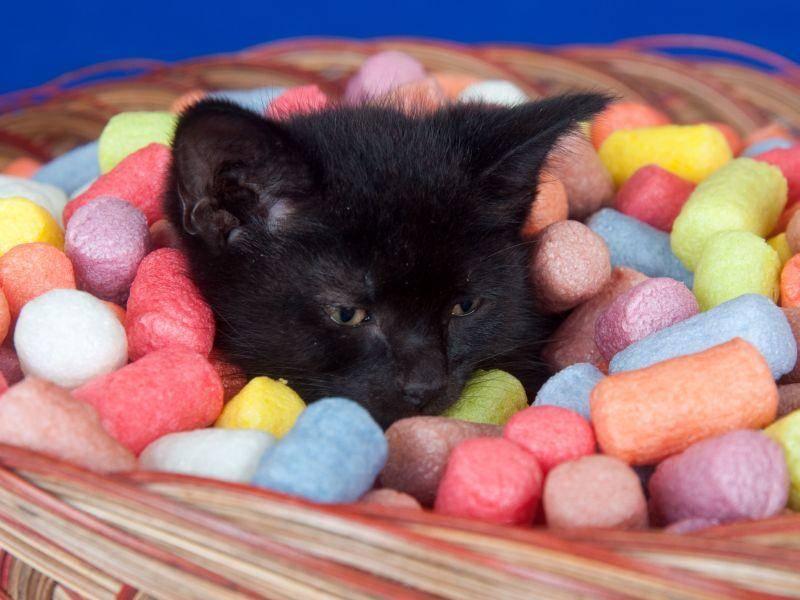 Huch: Das gehört dieses schwarze Katzenbaby natürlich nicht rein. Aber süß ist es trotzdem — Bild: Shutterstock / Tony Campbell