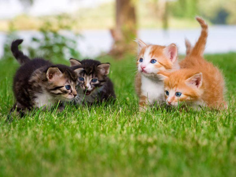 Da hatten wohl zwei Katzengeschwisterprächen die gleiche Idee — Bild: Shutterstock / NotarYES