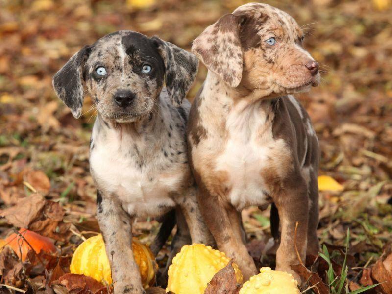... weil Hundegeschwister manchmal die selben lustigen Muster erben — Bild: Shutterstock / Zuzule