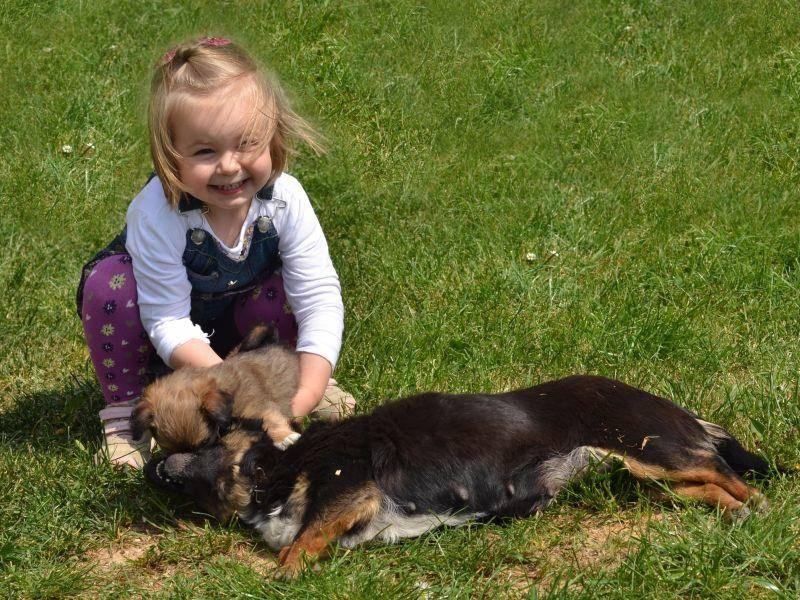 Spielen in der Sonne: Für Kinder und für Hunde schön — Bild: Shutterstock / Marcel Jancovic
